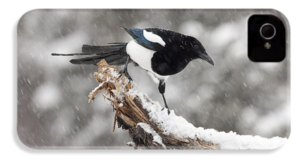 Magpie Out On A Branch IPhone 4 / 4s Case by Tim Grams