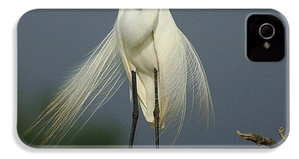 Majestic Great Egret IPhone 4 Case by Bob Christopher
