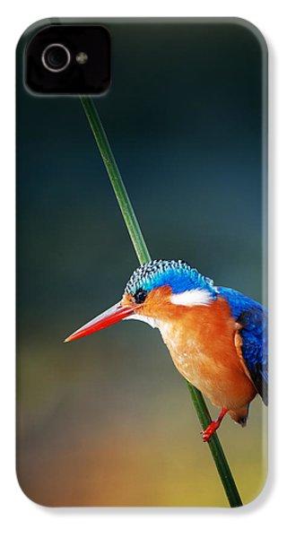 Malachite Kingfisher IPhone 4 Case by Johan Swanepoel