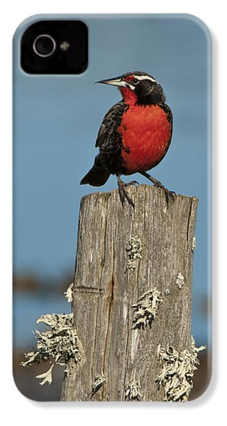 Male Long-tailed Meadowlark On Fencepost IPhone 4 Case by John Shaw