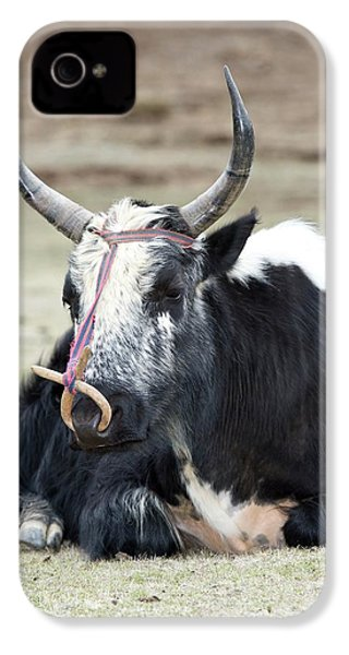 Male Yak In Potatso National Park IPhone 4 Case by Tony Camacho