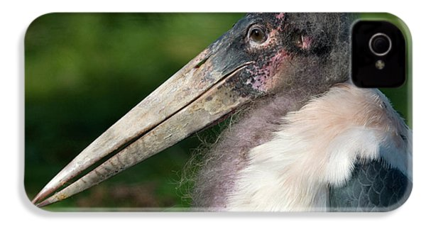 Marabou Stork IPhone 4 / 4s Case by Nigel Downer