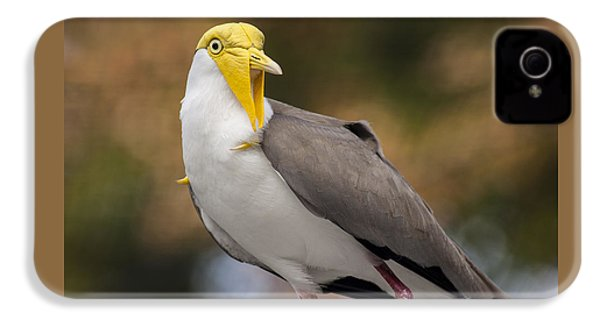 Masked Lapwing IPhone 4 Case by Carolyn Marshall