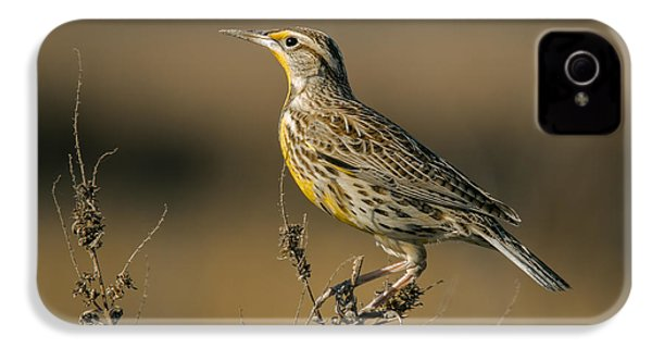 Meadowlark On Weed IPhone 4 Case by Robert Frederick