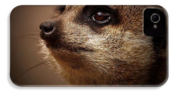 Meerkat 6 IPhone 4 Case by Ernie Echols