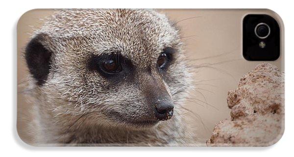 Meerkat 7 IPhone 4 Case by Ernie Echols