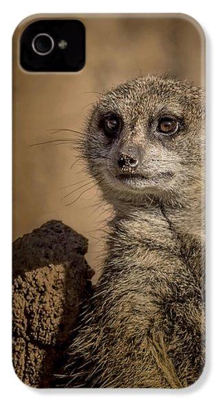 Meerkat IPhone 4 Case by Ernie Echols