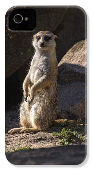 Meerkat Looking Forward IPhone 4 Case by Chris Flees