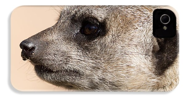 Meerkat Mug Shot IPhone 4 Case by Ernie Echols
