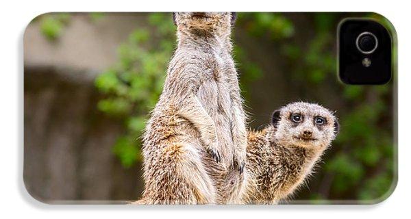 Meerkat Pair IPhone 4 Case by Jamie Pham