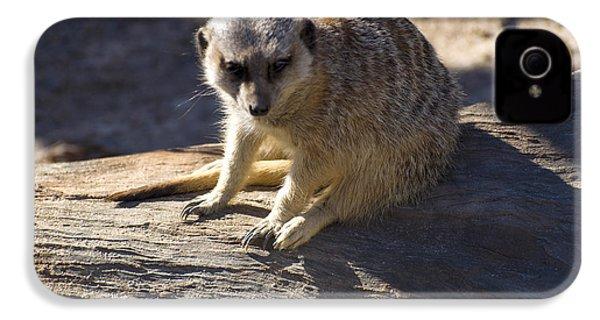Meerkat Resting On A Rock IPhone 4 Case by Chris Flees