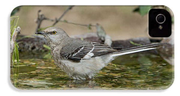 Mockingbird IPhone 4 Case by Anthony Mercieca