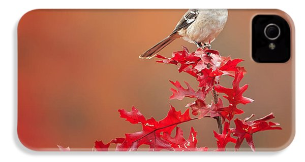 Mockingbird Autumn Square IPhone 4 Case by Bill Wakeley