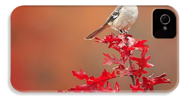 Mockingbird Autumn Square IPhone 4 / 4s Case by Bill Wakeley