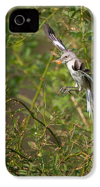 Mockingbird IPhone 4 Case by Bill Wakeley