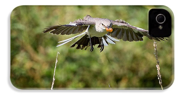 Mockingbird In Flight IPhone 4 Case by Bill Wakeley