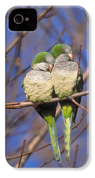Monk Parakeets IPhone 4 Case