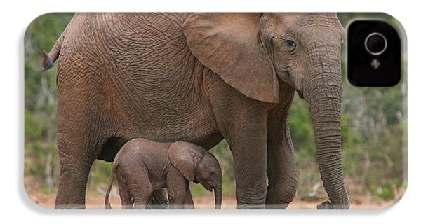 Mother And Calf IPhone 4 Case