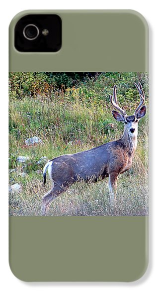 IPhone 4 Case featuring the photograph Mule Deer Buck by Karen Shackles