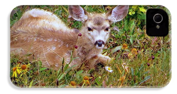 IPhone 4 Case featuring the photograph Mule Deer Fawn by Karen Shackles