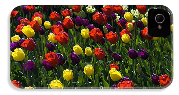 IPhone 4 Case featuring the photograph Multicolored Tulips At Tulip Festival. by Yulia Kazansky