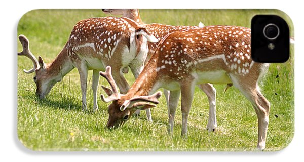 Multitasking Deer In Richmond Park IPhone 4 Case