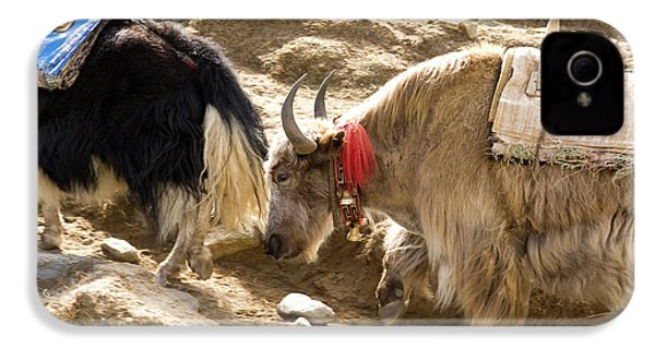 Nepal Yak Move Along The Everest Base IPhone 4 Case by David Noyes