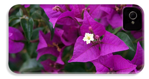 New River Bougainvillea IPhone 4 Case by Rona Black