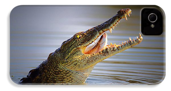 Nile Crocodile Swollowing Fish IPhone 4 Case by Johan Swanepoel