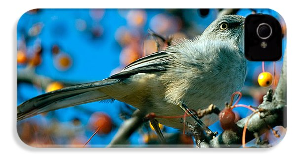 Northern Mockingbird IPhone 4 Case by Bob Orsillo