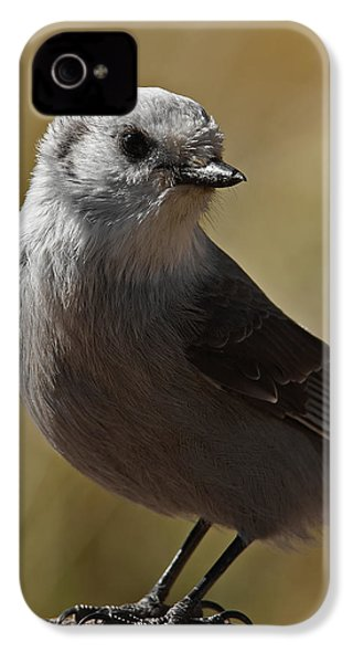 Northern Mockingbird IPhone 4 Case by Ernie Echols