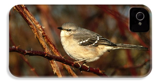 Northern Mockingbird Mimus Polyglottos IPhone 4 Case by Paul J. Fusco