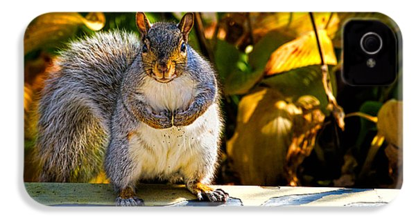 One Gray Squirrel IPhone 4 Case by Bob Orsillo