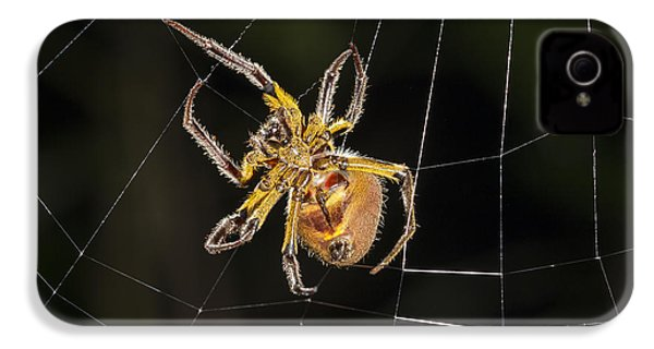 Orb-weaver Spider In Web Panguana IPhone 4 Case by Konrad Wothe