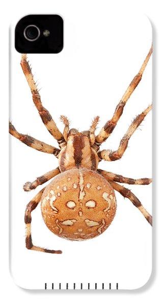 Orb Web Spider IPhone 4 Case