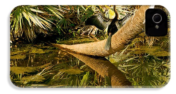 Oriental Darter Anhinga Melanogaster IPhone 4 / 4s Case by Panoramic Images