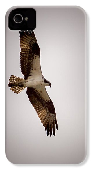 Osprey IPhone 4 / 4s Case by Ernie Echols