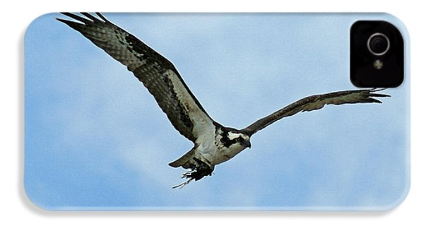 Osprey Nest Building IPhone 4 / 4s Case by Ernie Echols
