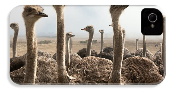Ostrich Heads IPhone 4 Case by Johan Swanepoel