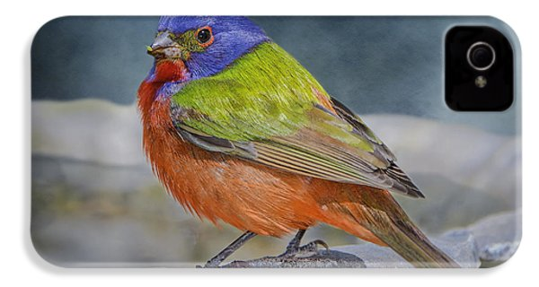 Painted Bunting In April IPhone 4 Case by Bonnie Barry