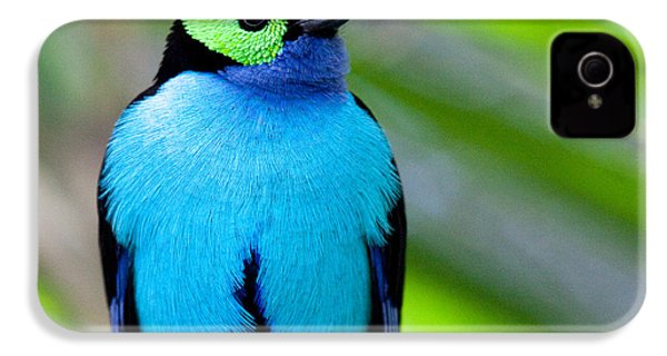 Paradise Tanager IPhone 4 Case by Nathan Rupert