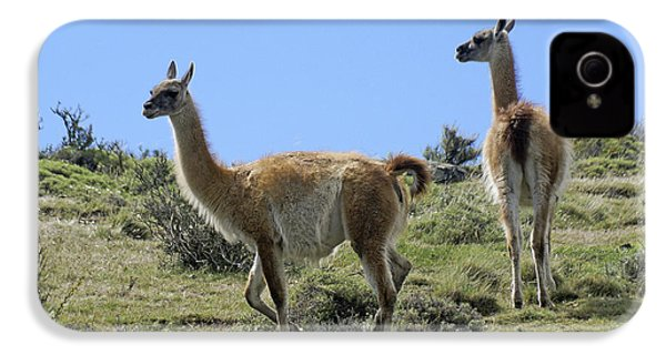 Patagonian Guanacos IPhone 4 / 4s Case by Michele Burgess