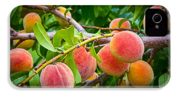Peaches IPhone 4 / 4s Case by Inge Johnsson