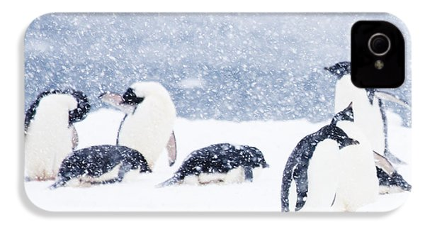 Penguins In The Snow IPhone 4 / 4s Case by Carol Walker