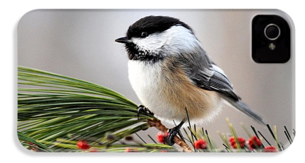 Pine Chickadee IPhone 4 Case by Christina Rollo