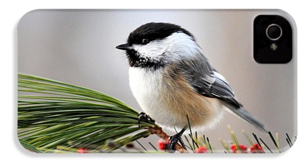 Pine Chickadee IPhone 4 / 4s Case by Christina Rollo