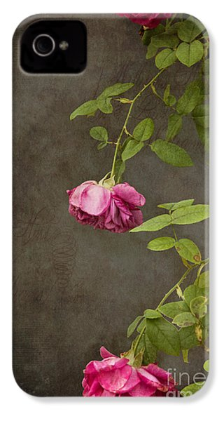Pink On Gray IPhone 4 Case by K Hines
