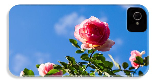 Pink Roses - Featured 3 IPhone 4 Case by Alexander Senin