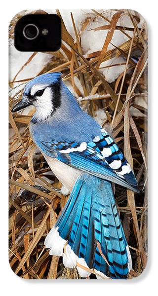 Portrait Of A Blue Jay IPhone 4 Case by Bill Wakeley