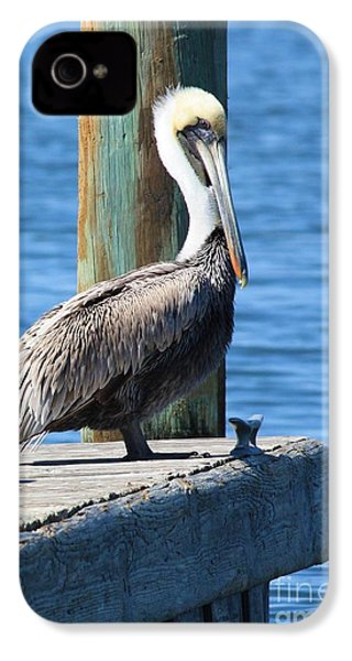 Posing Pelican IPhone 4 Case by Carol Groenen
